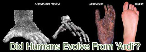 Did Humans Evolve?